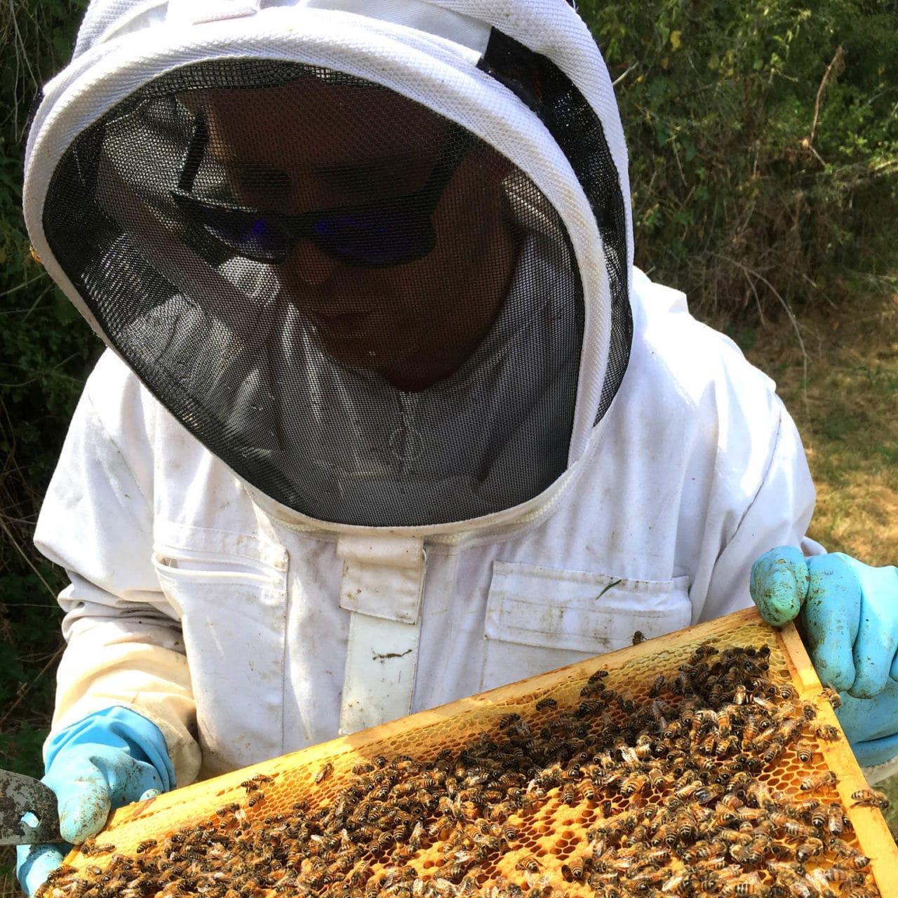 La ruche de Lola